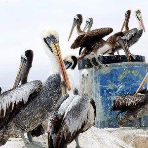 alpinca-3peru-paracas-wycieczka
