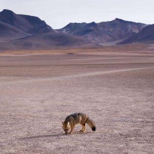 boliwia-wyprawy-sud-lipez