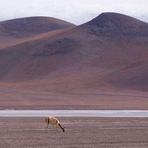 wycieczki-do-boliwii