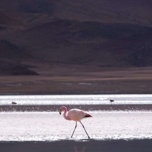 wyprawa-boliwia-flamingi-laguny-uyuni