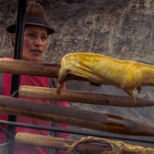 swinka-morska-ekwador