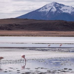 wycieczki-boliwia-laguny-flamingi-uyuni