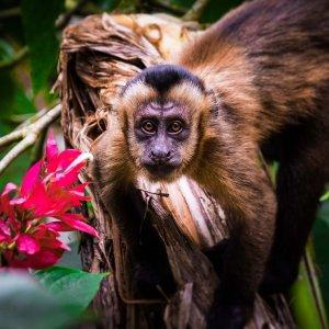 wycieczki-do-amazonki