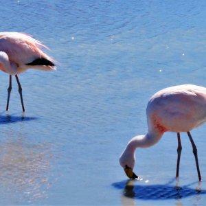 uyuni-wycieczka-boliwia-flamingi