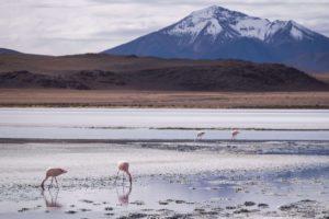 boliwia wycieczki, flamingi, salar de uyuni