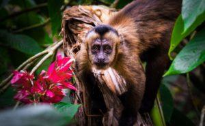 Wycieczki do Peru, peruwiańska dżungla, puerto maldonado