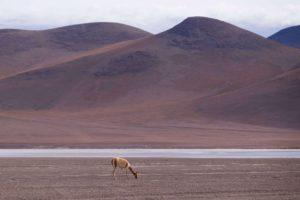 wycieczki salar de uyuni, boliwia