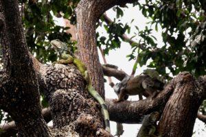 wycieczki do Ekwadoru, wyspy galapagos