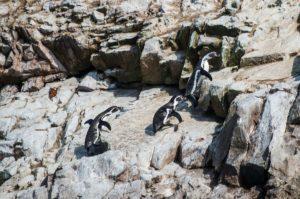 Wybrzeże Peru, wyspy Ballestas