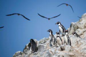 Wycieczki do Peru, Wyspy Ballestas