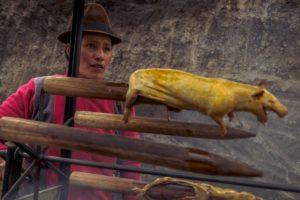 ekwador swinka morska