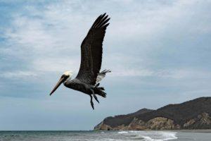 wybrzeze ekwador, wycieczki ekwador
